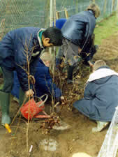 Tree planting at Sutton Bonington Primary School.