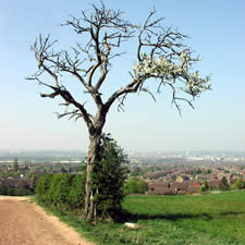 A lone tree on a hill overlooking Nottingham City.